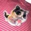 Реглан укороченный  - Котик 0